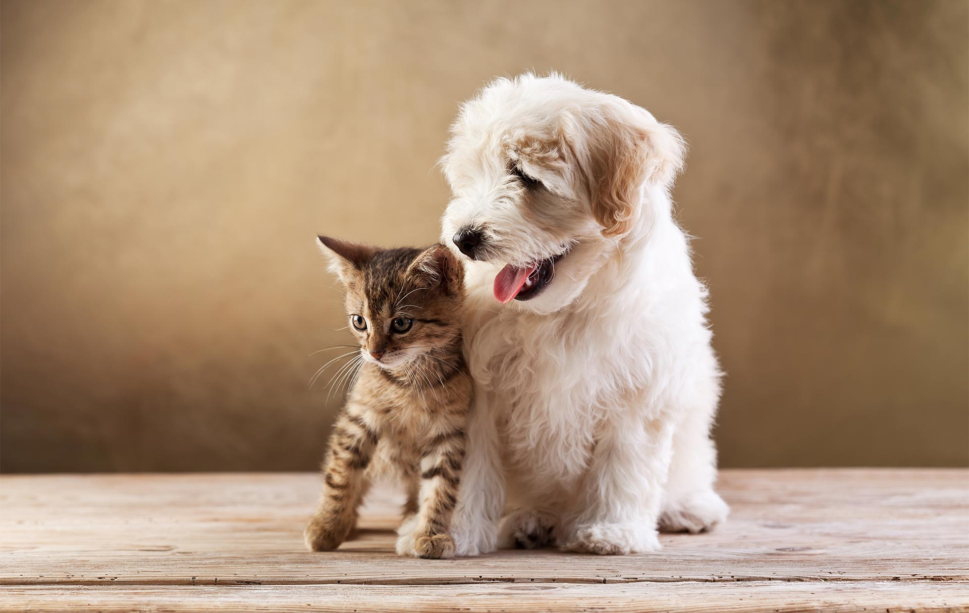Challenges Of Homeowner's Insurance and Dogs