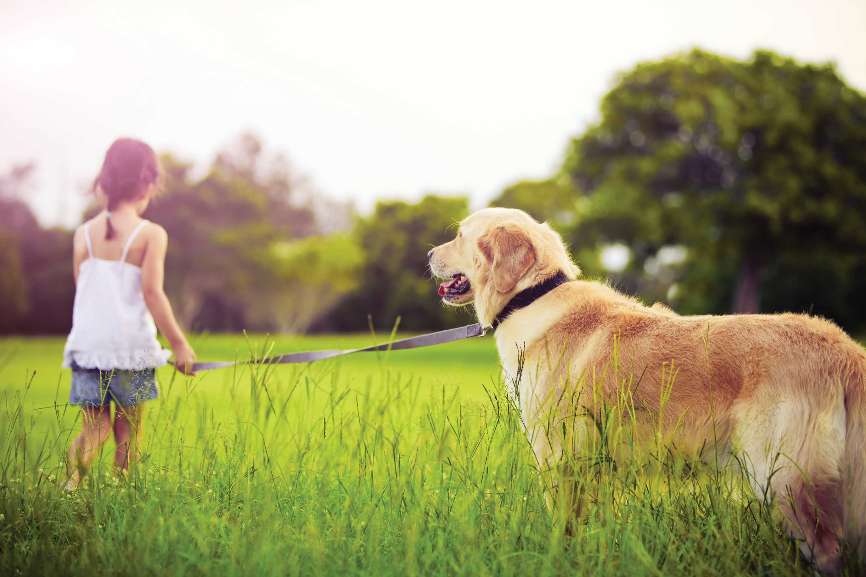 Pet Insurance Cost - Which Pet Insurance?